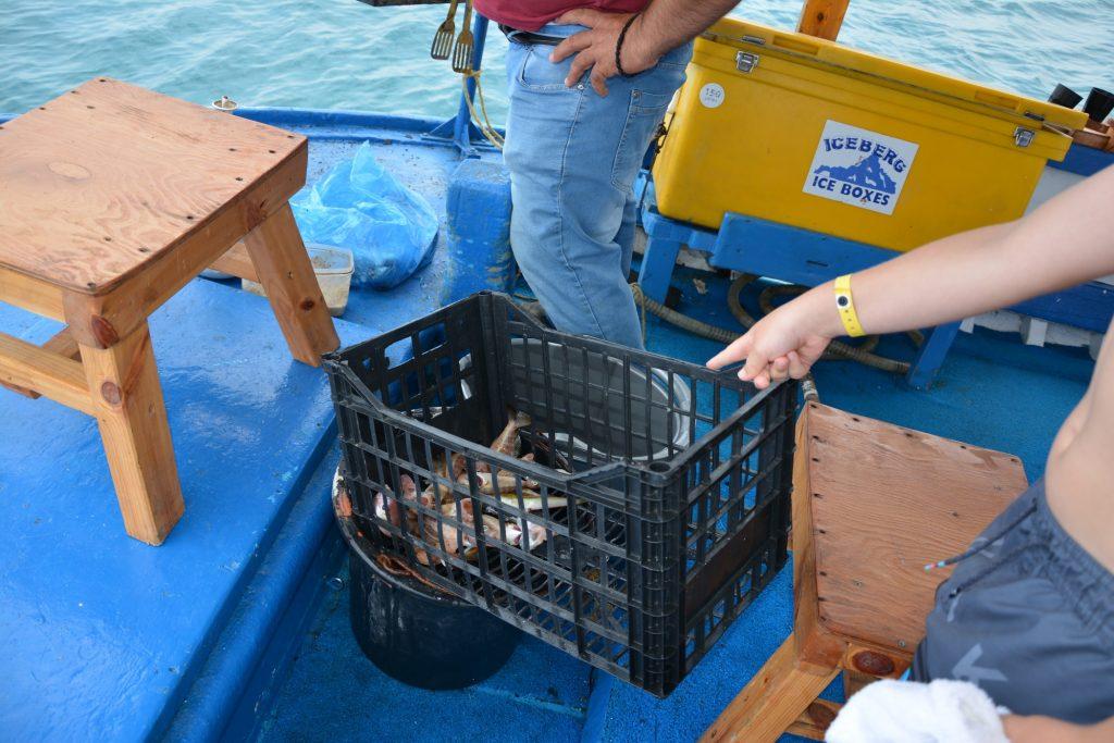 Gus spanar in sina fiskar bland dagens fångst.