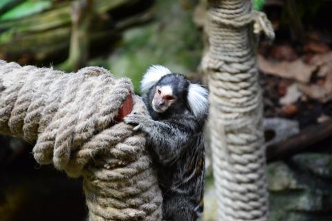 Närgångna apor