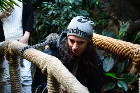 Aporna hoppade på mig både på ryggen och knät