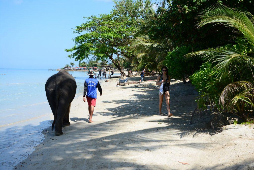 Elefanter som badar i vattnet är en vanlig syn vid Kai Bae Beach