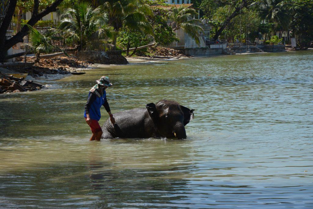 Badande elefanter är en vanlig syn på Kai Bae Beach.