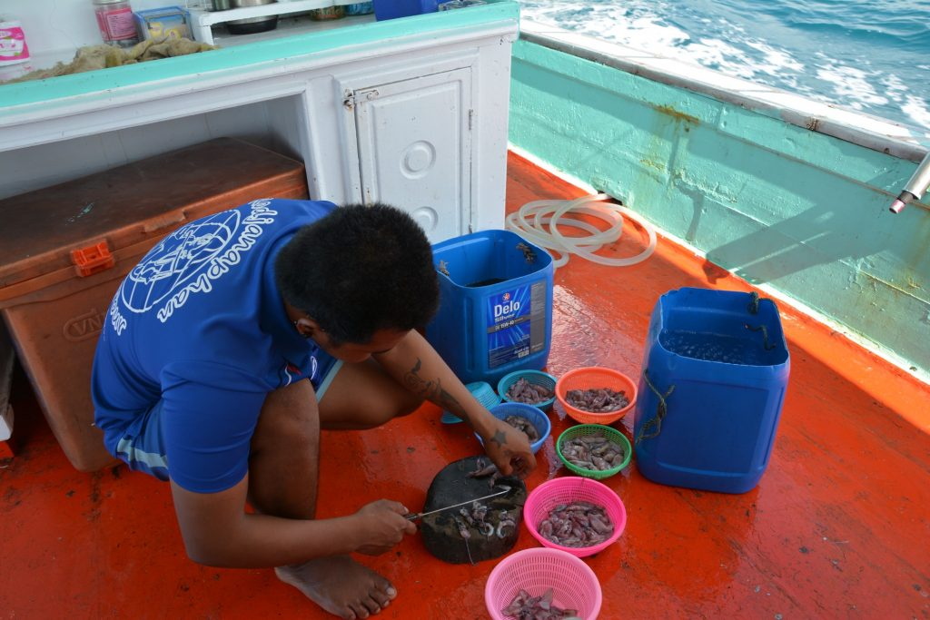 Som bete används framför allt små bitar av bläckfisk.