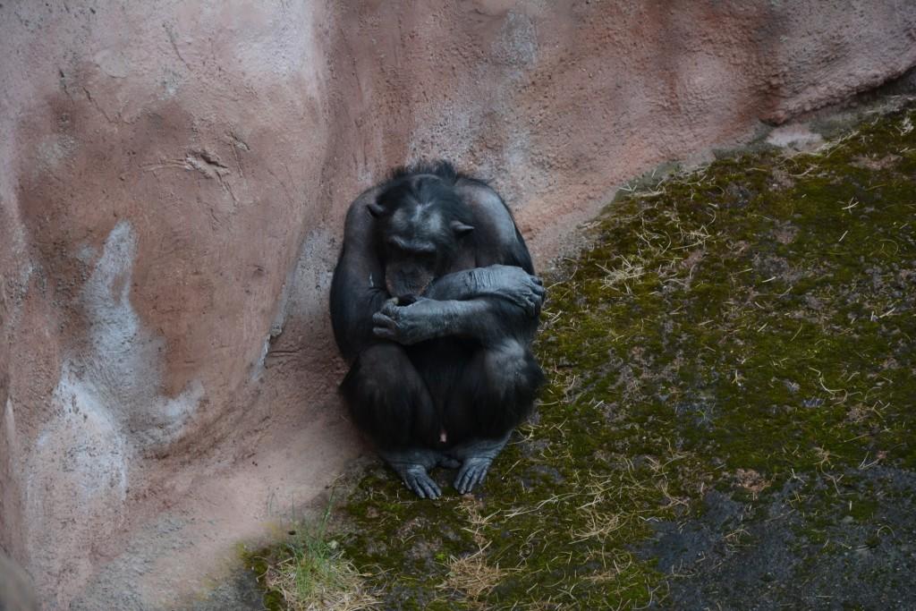 Aporna kan man stå och kolla på hur länge som helst.