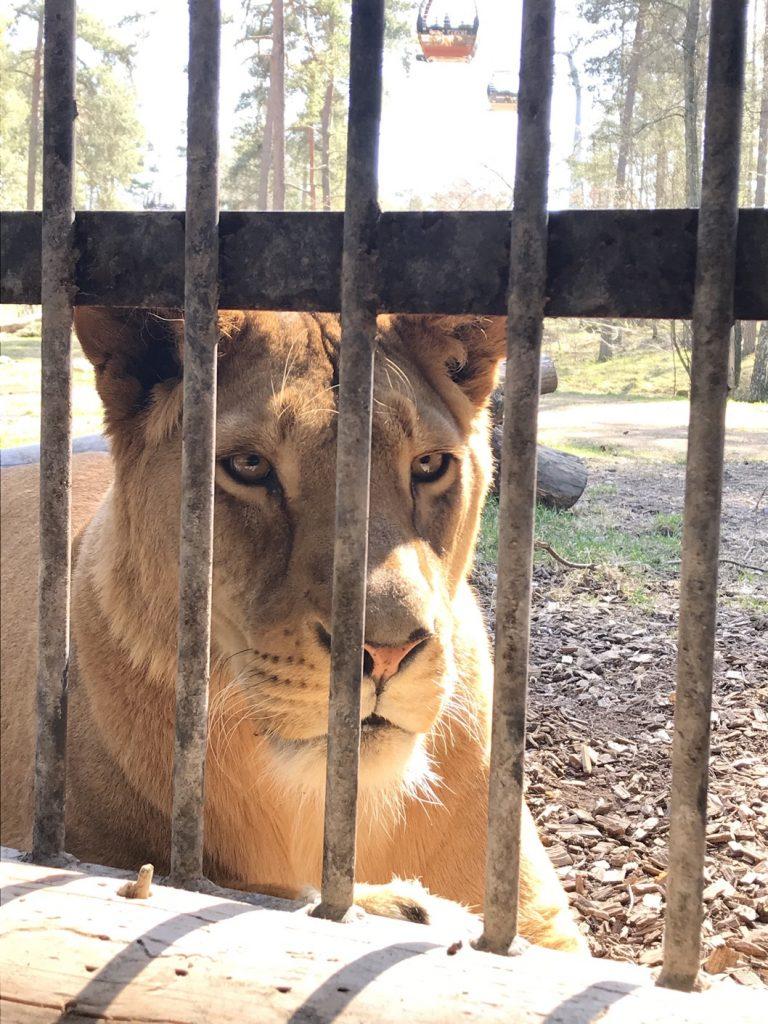 Här talar vi närkontakt med de mäktiga djuren.