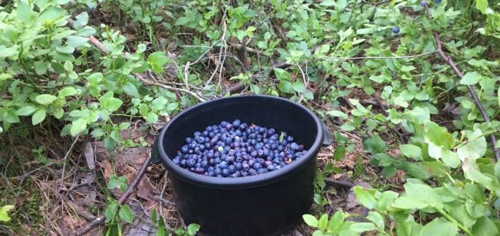 Nyttiga goda blåbär