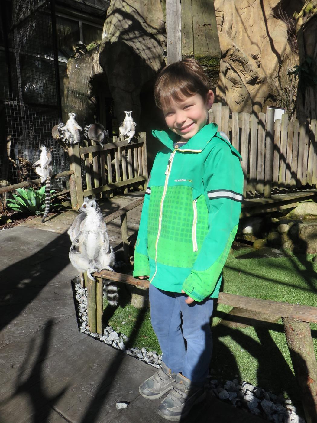 Mitt bland alla fritt strövande lemurer!