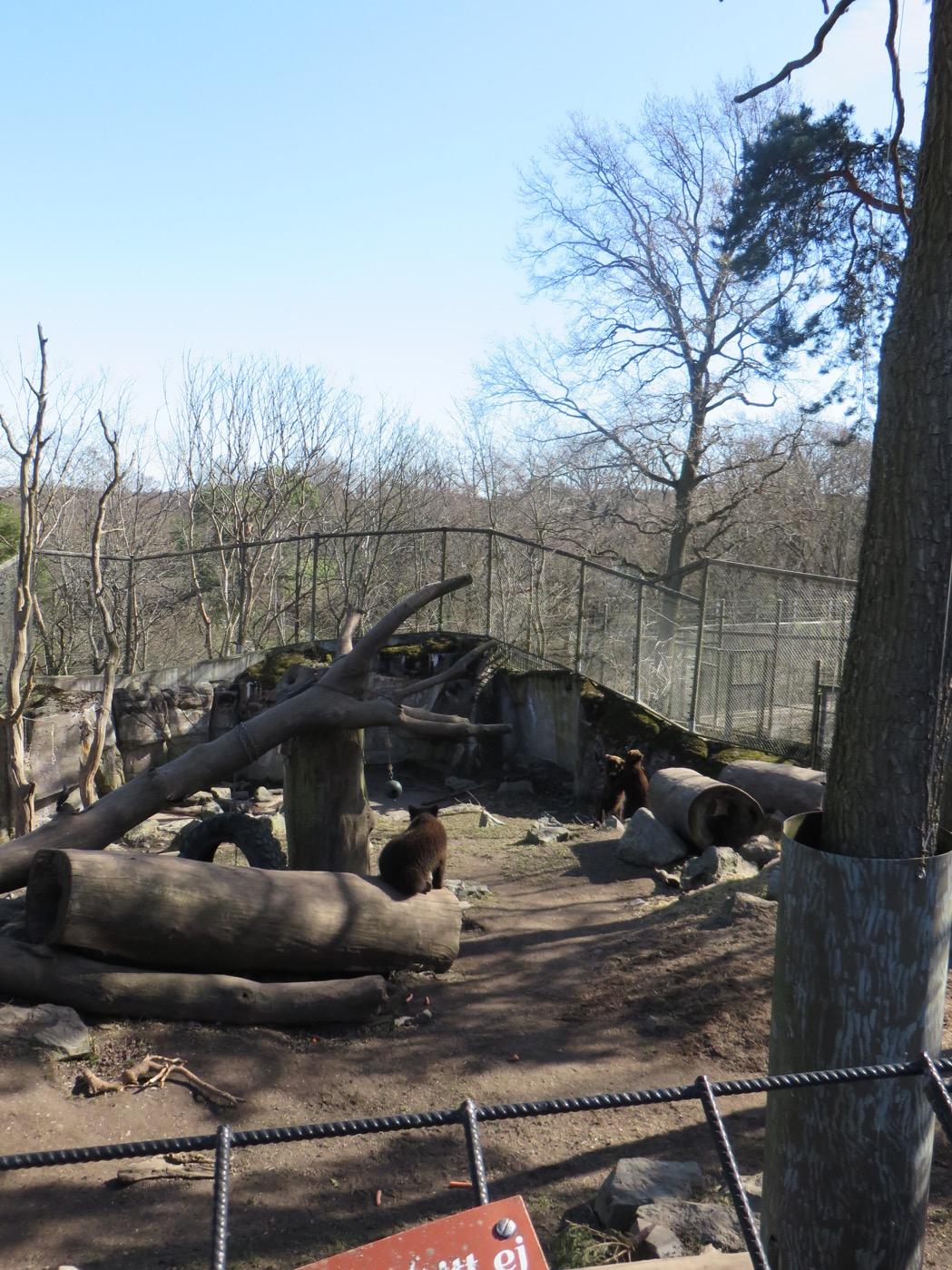 Björnberget med några av de björnar som precis vaknat ur vintersömnen!