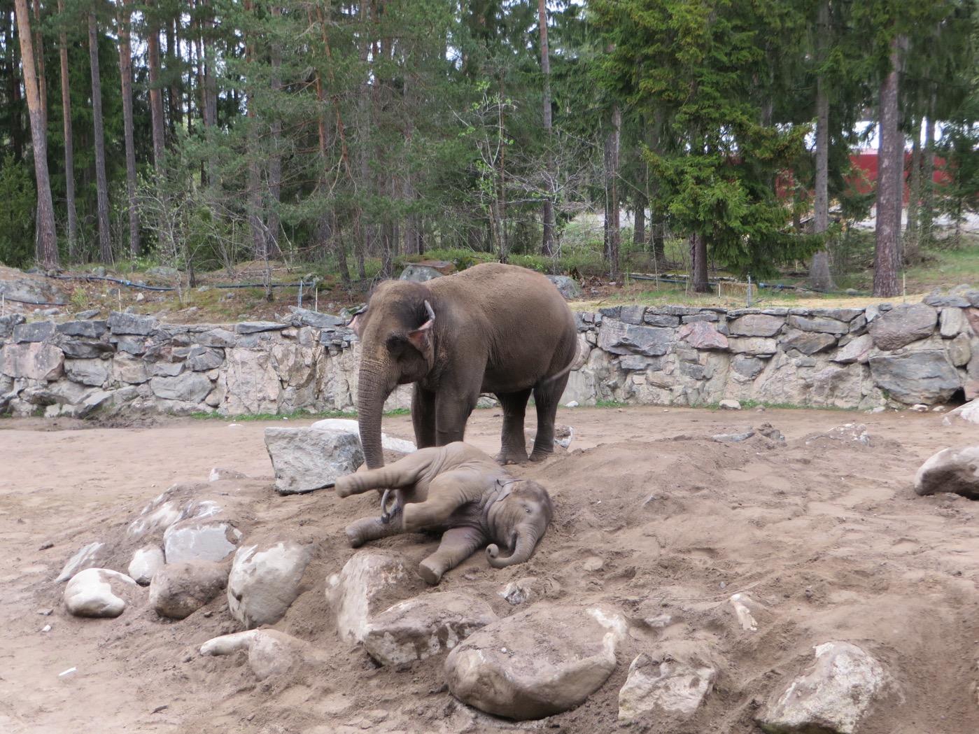 Elefanterna kan man titta på hur länge som helst.
