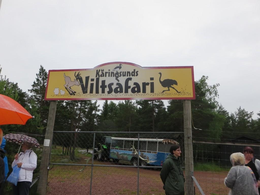 Viltsafari i Käringsund.