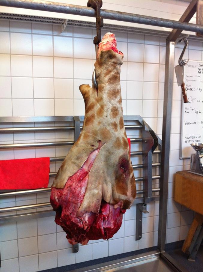 En giraffhals till rovdjuren
