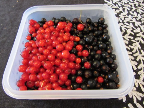 Svarta och röda vinbär från egna trädgården
