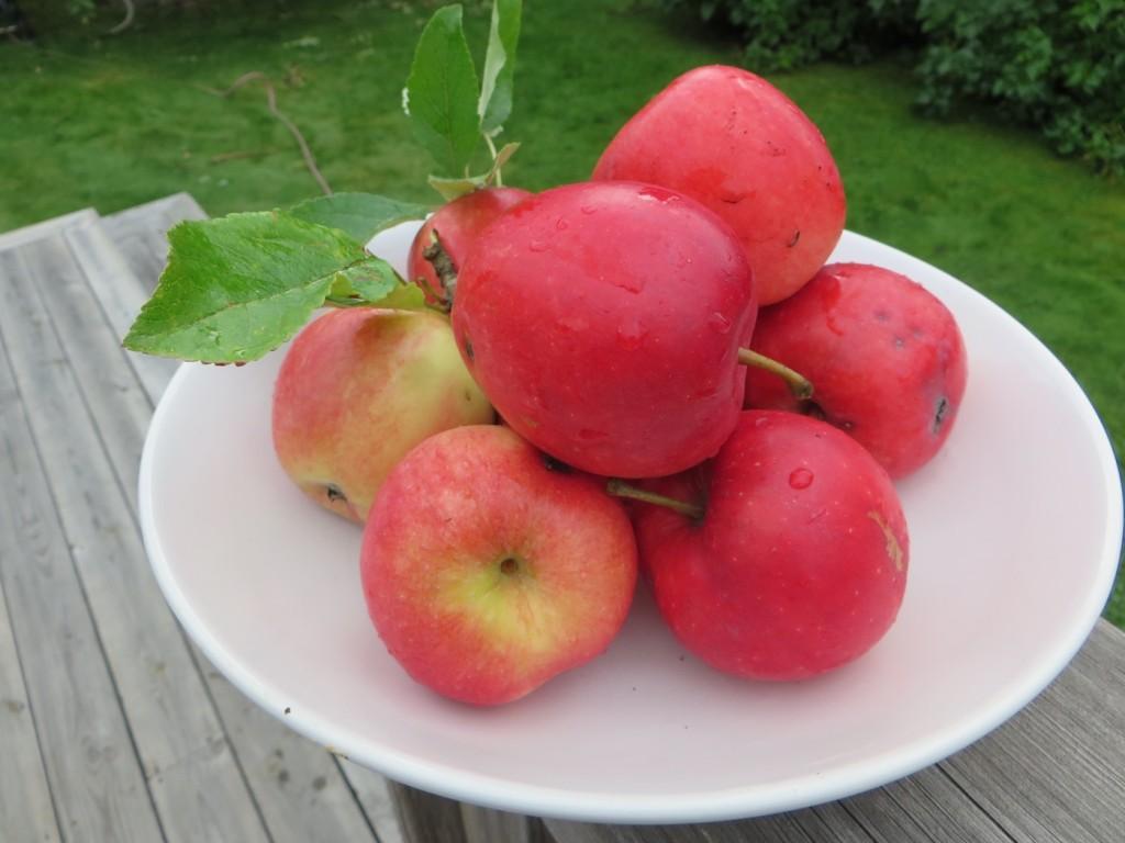 Goda äpplen från egna tomten.