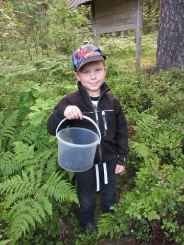 Gustaf visar stolt upp de blåbär vi plockat