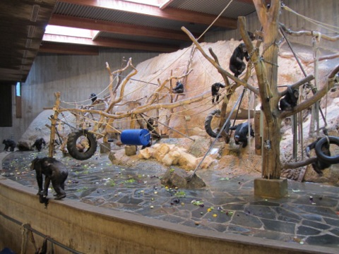 Schimpanserna som lät och stojade
