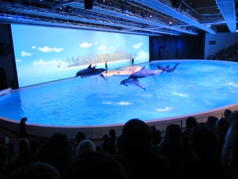 Delfinerna levererar som vanligt!