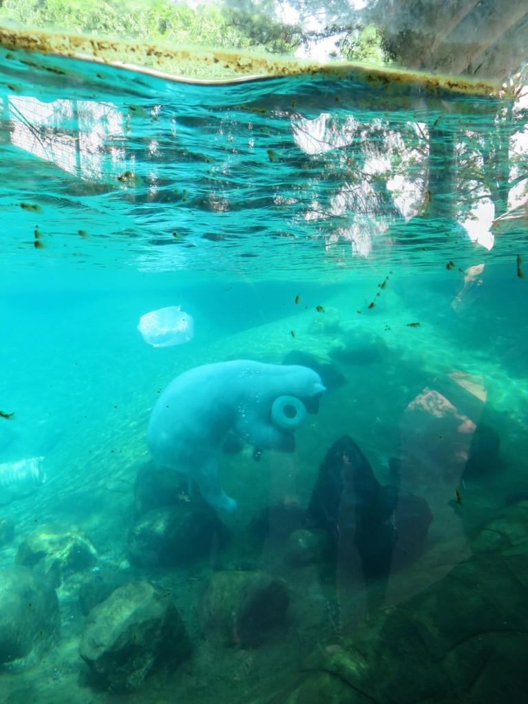 Isbjörnarna bjöd på en spontan show