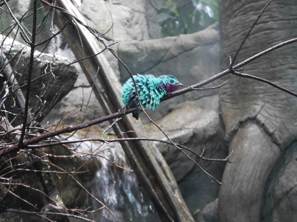 Vacker fågel som tar en paus.