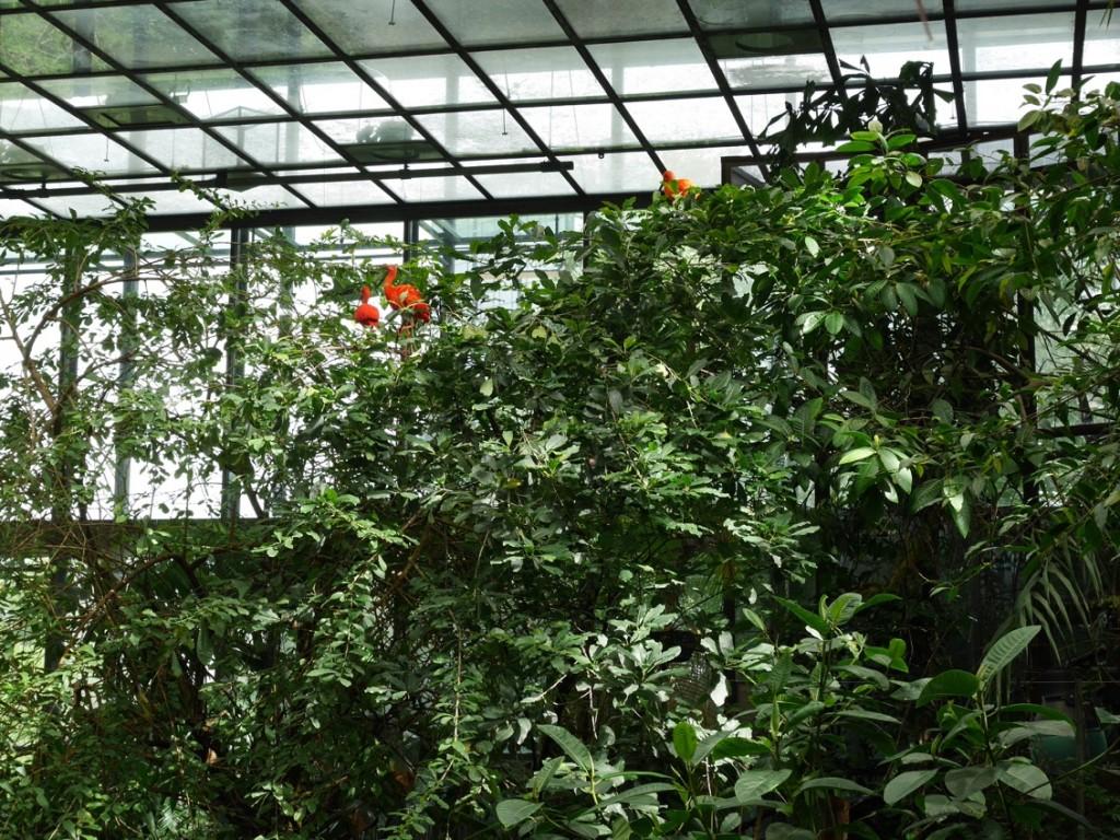 Färggranna, vackra fåglar finns det gott om i regnskogen.