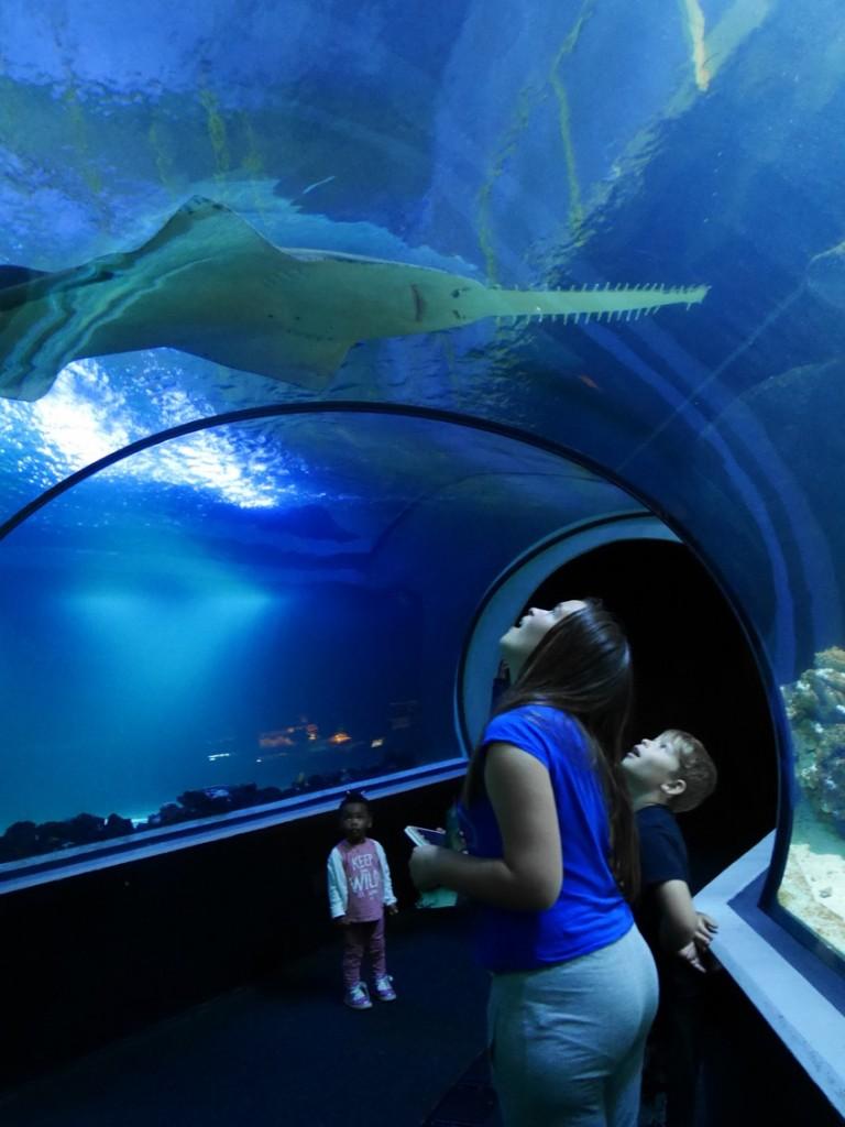 Tänk att gå rakt under en livs levande haj!