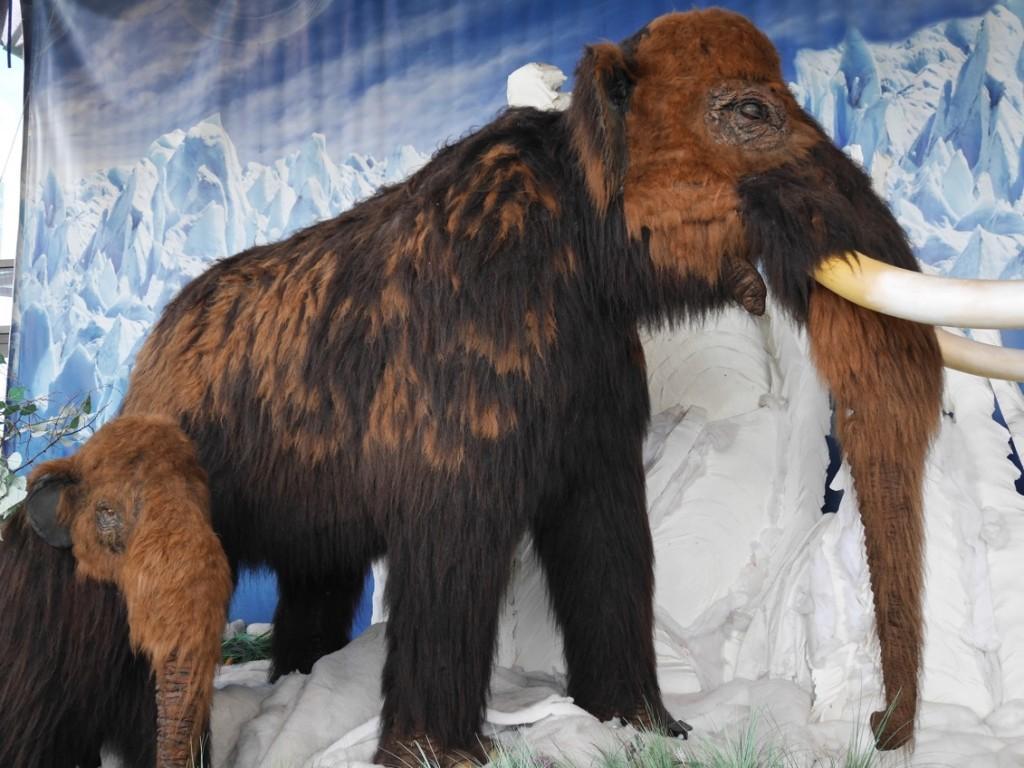 Varför dog Mammuten ut? Det fanns inga Papputar :-) !
