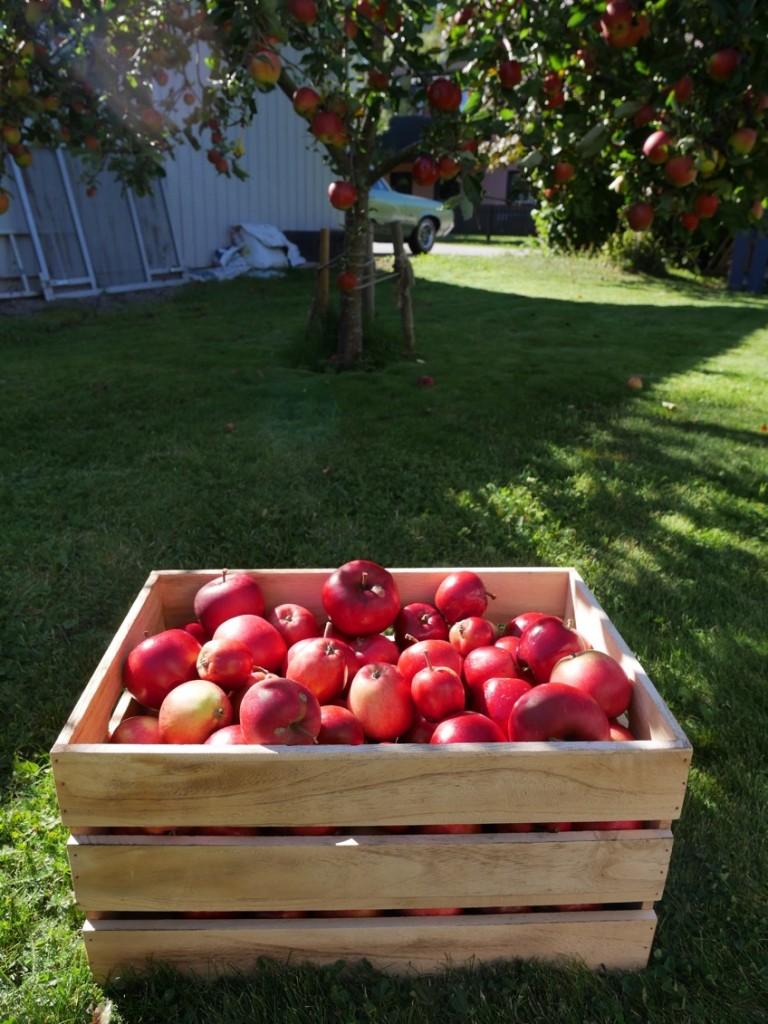 Fem goda saker du kan göra med äpplen