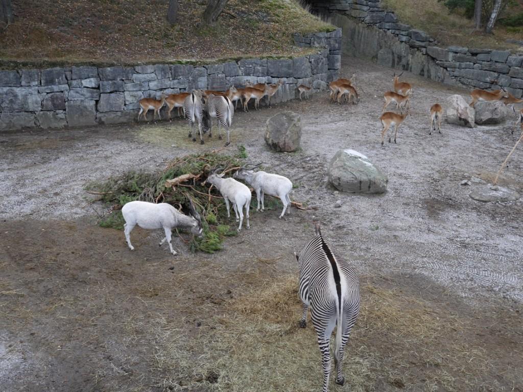 Zebror, antiloper och andra fina djur.