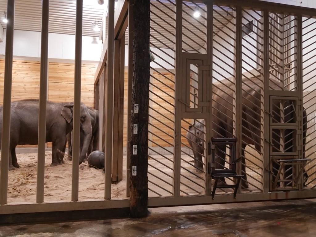 Ingen rolig miljö för de stora elefanterna.