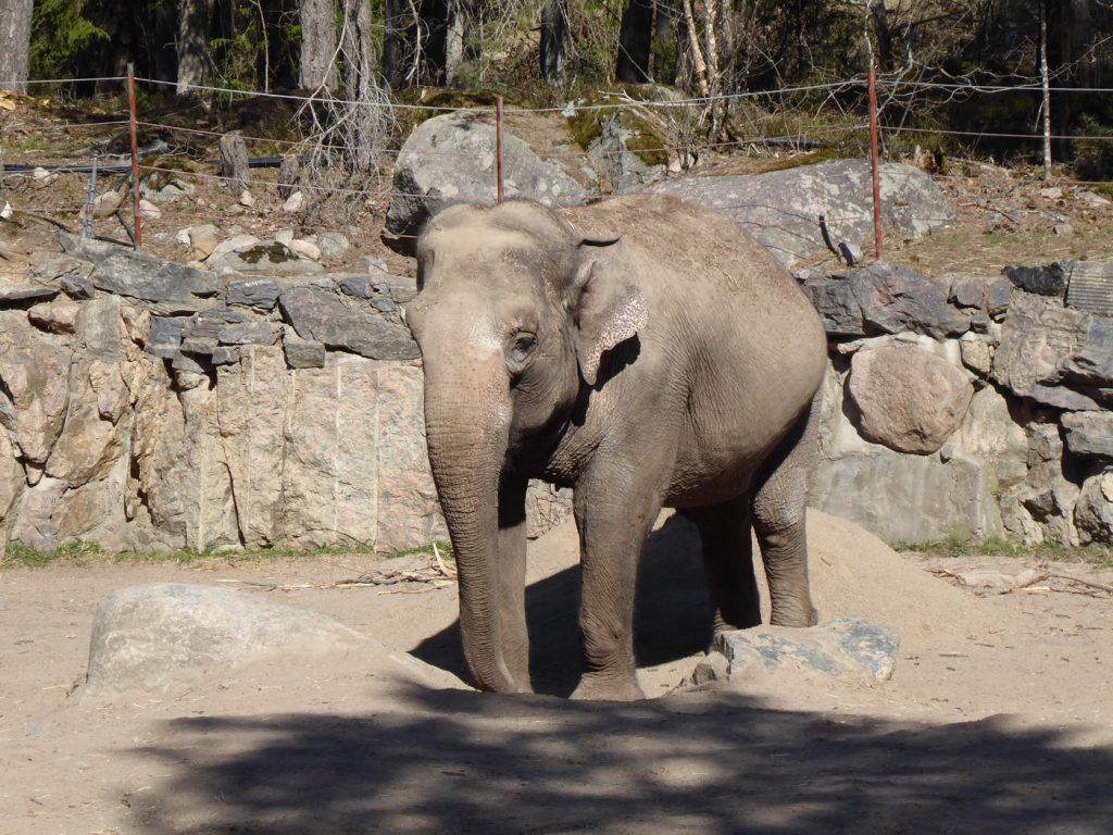 Elefanterna är roliga djur - svalkar av sig med en dusch sand!