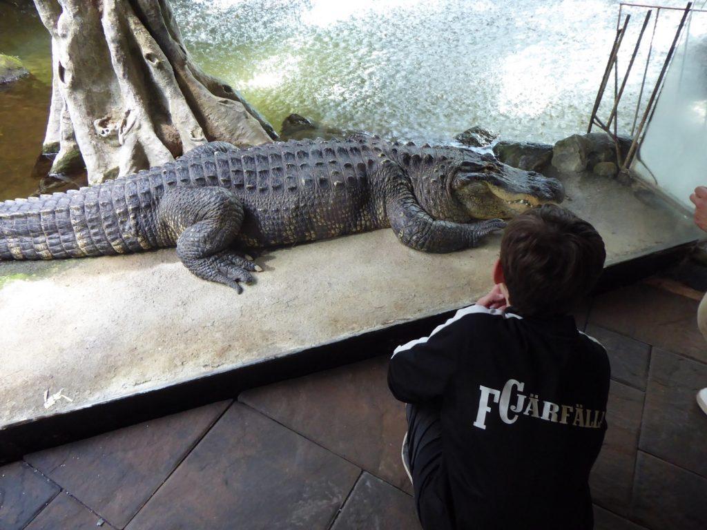 Krokodil, Alligator eller nåt sånt - minns inte riktigt :-)