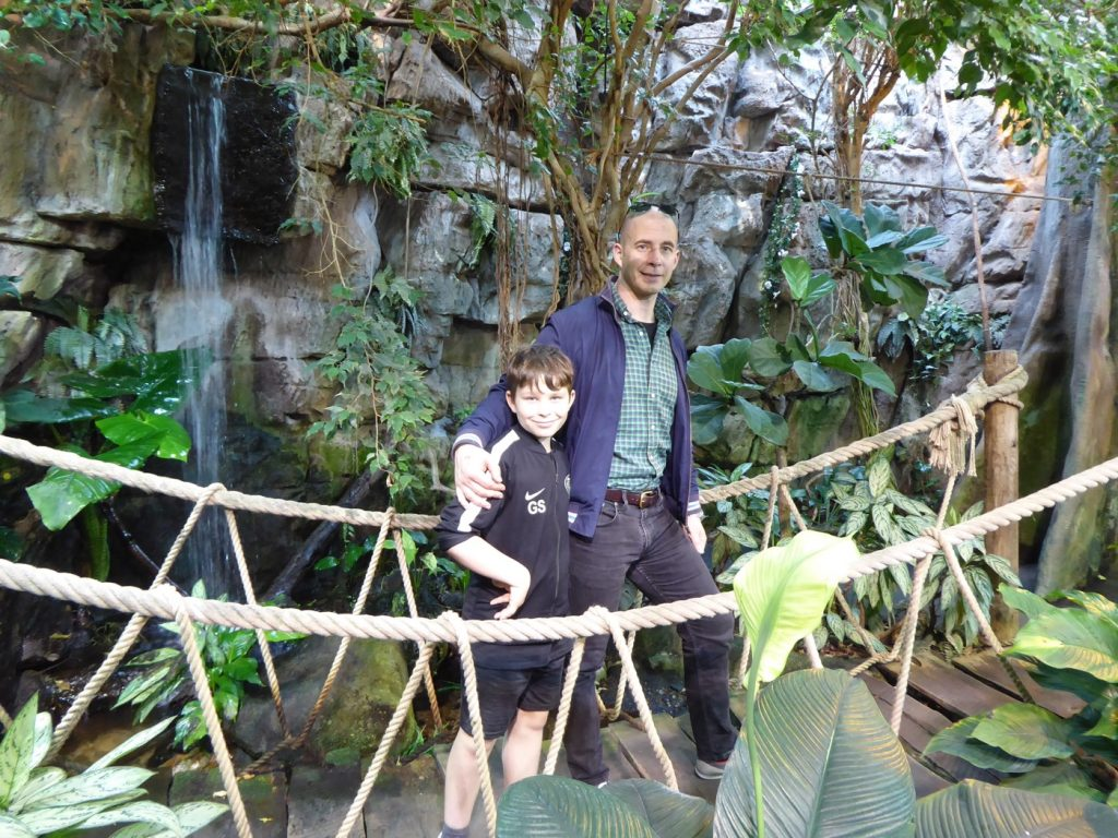 Fina uppbyggda tropiska miljöer fulla med olika djur.