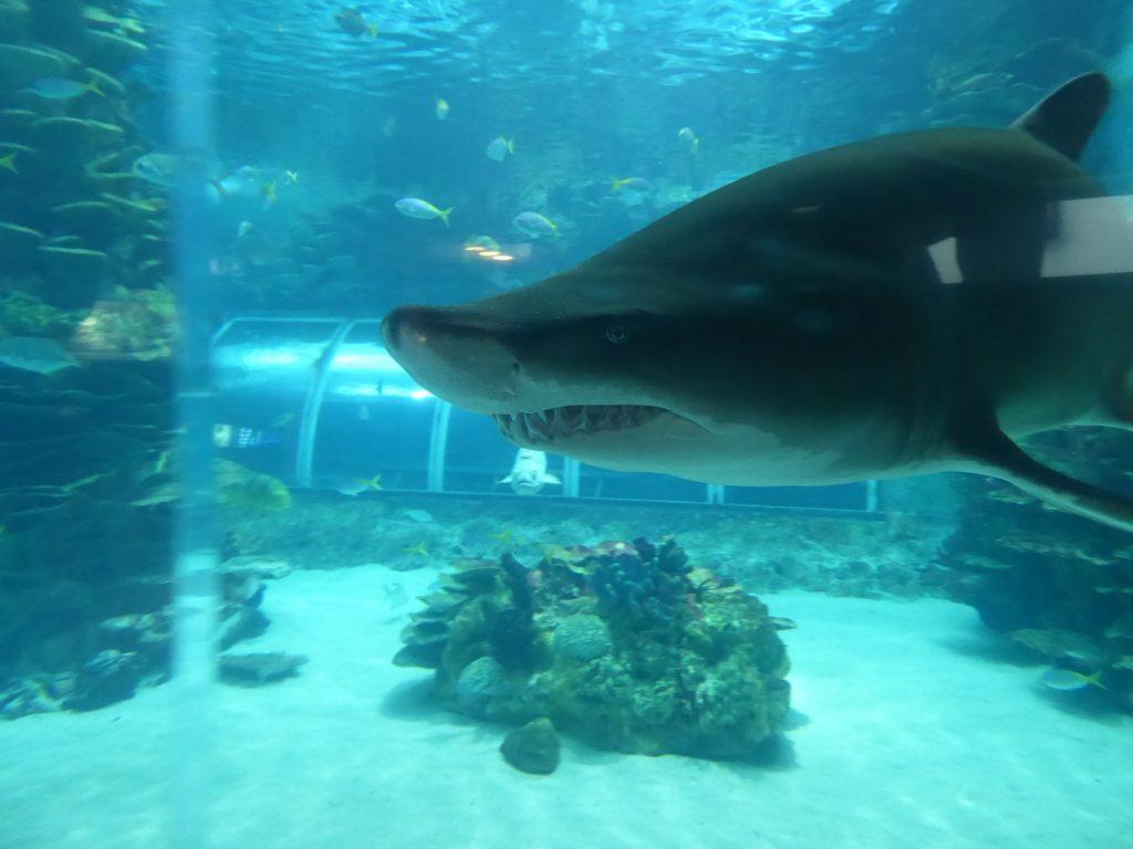 Hajar och fiskar!