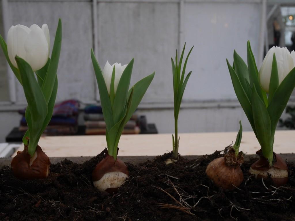 Inne i växthusen fick man en känsla av att våren faktiskt väntar runt hörnet!