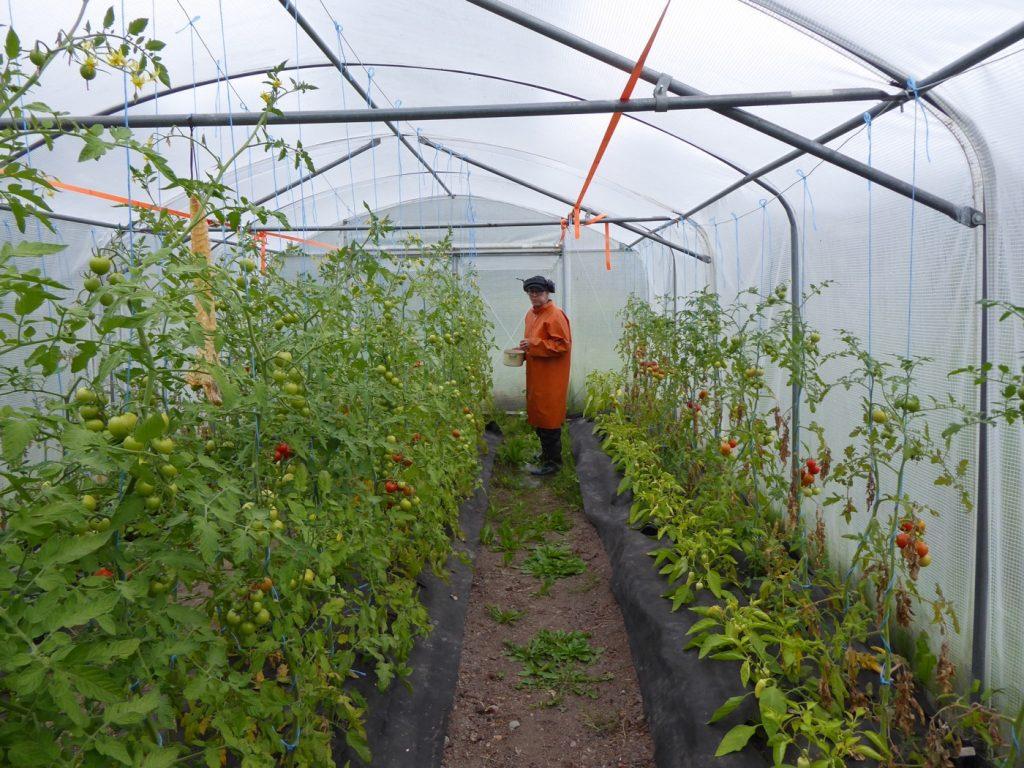 Regnigt besök på Idholmens gård.