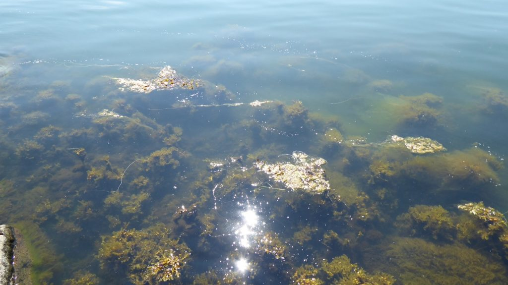 Vad tror ni? Sjögräs eller koraller??!!
