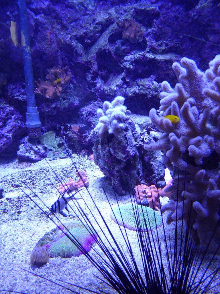 Hittar du Nemo?!