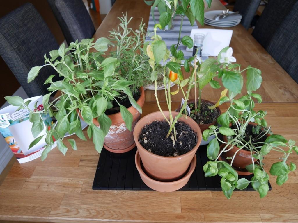Tulpaner och kryddgrönt