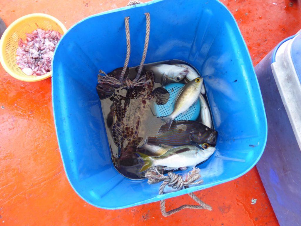 En bråkdel av all fisk som drogs upp.