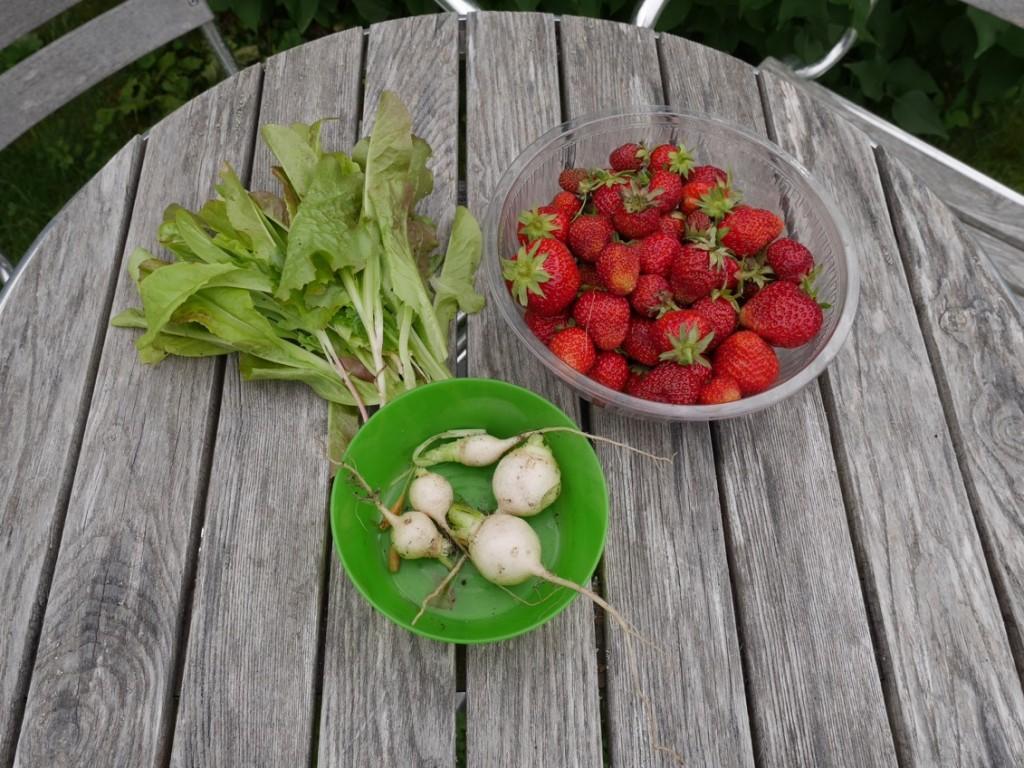 Skörd av både gubbar och grönsaker.