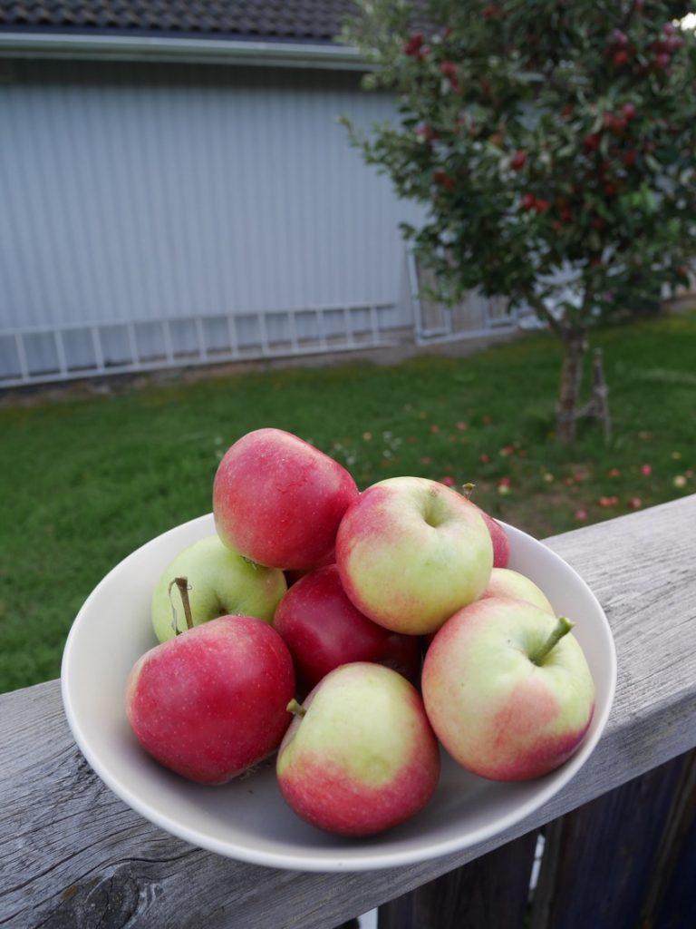 Mina fem bästa recept på äppelkaka.
