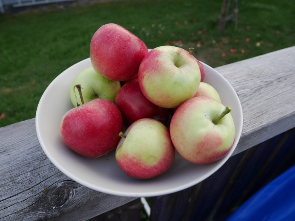 Röda och krispiga äpplen.